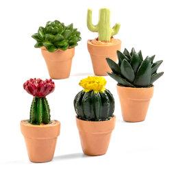 LIV-131, Cactus, imanes decorativos con forma de cactus, 5 uds.